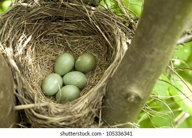 bird's nest with eggs on tree