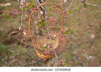 Bird's nest and eggs, birds reproduce with eggs