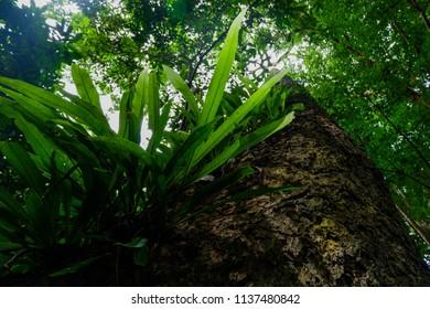 bird's nest fern in rainforest