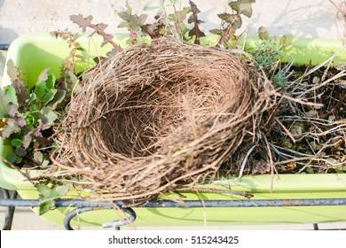 birds nest in a flower pot