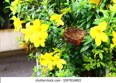 Bird's nest with flowers in THAILAND.