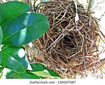 Bird's nest in garden
