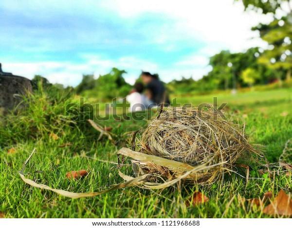 Bird's nest  & garden