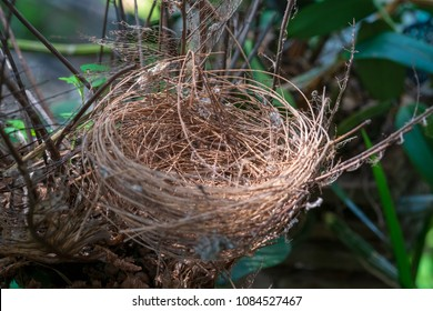 Bird's nest on a branch
