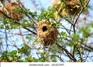 Bird's nest on branches with green leaf and blue kky