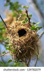Bird's nest on bronchus with green leaf and blue sky