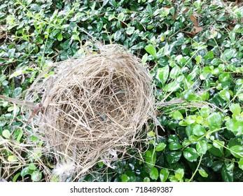 Bird's nest on green leaf background