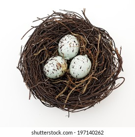 A bird's nest with three eggs waiting to hatch.