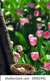 Birdu0027s Nest Is In Unprotected Location Among Tulips At Garvan Woodland  Gardens In Hot Springs,