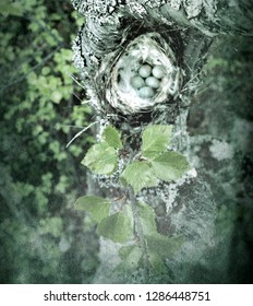 Birds nests guide. Cozy Arctic redpoll (Acanthis hornemanni) white nest in birch tree among the scale lichen. The nesting hollow is lined with partridge feathers. Lapland. Retro style
