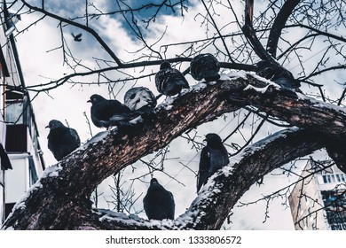 Birds on the branches of a tree