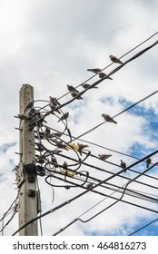 Birds on Electric Wire with Blue Sky
