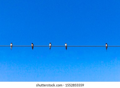 Birds on electrical cable in blue sky background,5 birds on power cable.