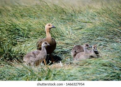 Birds on the Falkland Islands