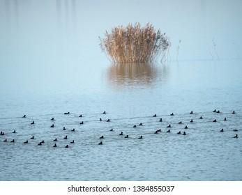 Birds on Mihailesti lake, Romania forming a musical scale like pattern. Mihailesti is a dam lake near Bucharest, built on Argeș river.