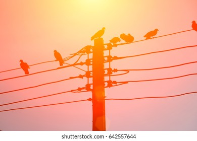 Birds on the power lines in sunset time.