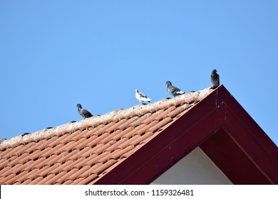 birds on the roof Cyprus