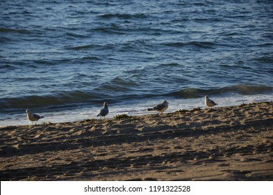 Birds on the sand of the Third Beach (Vancouver - Canada)