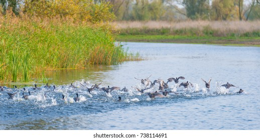 Birds on the shore of a pond in sunlight at fall