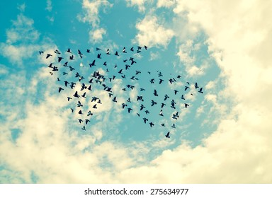 Birds on sky , growth concept