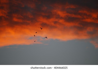 Birds on sunset