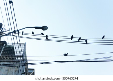 Fabulous Birds On A Telephone Wire Images Stock Photos Vectors Shutterstock Wiring 101 Capemaxxcnl