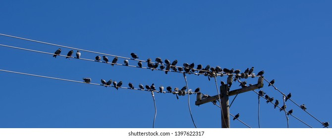 Wondrous Birds On A Telephone Wire Images Stock Photos Vectors Shutterstock Wiring 101 Capemaxxcnl