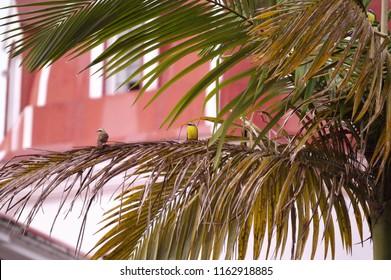 Birds on tree branch. Cuetzalan Del Progreso, Puebla Mexico.