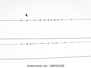 Birds on a wire one flying away