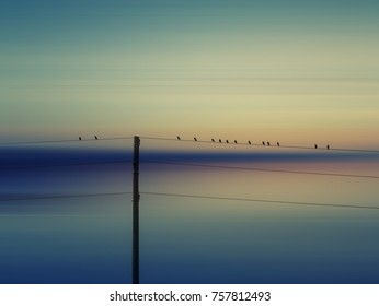 birds on the wire and sunset sky