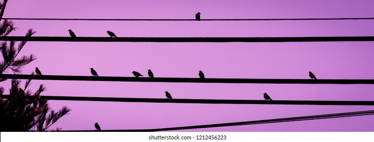Birds on wires with colorful purple background nature photography urban wildlife