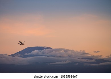 Birds over the Mount Kilimanjaro  Crowned Cranes flying over the Mt. Kilimanjaro at Sunset. Rising beyond the Boundaries