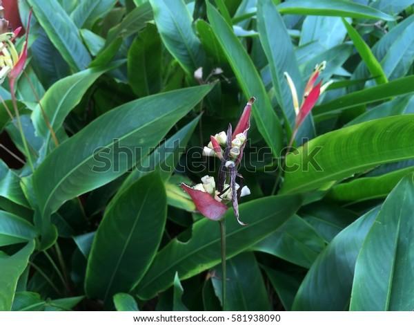 Birds of Paradise Flower Closeup