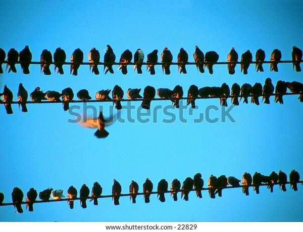 Birds perched on telephone wires