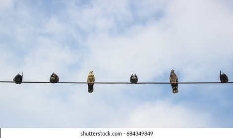 birds perched on a wire with blue sky background