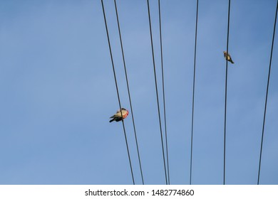 Birds perching on electrical power lines or wires. Space for text.
