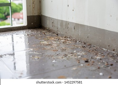 Birds or pigeons make floor and wall dirty by dropping a lots of poops when the owner of house is not home for long time. It has pathogens and some person can get cryptococcosis from rock dove