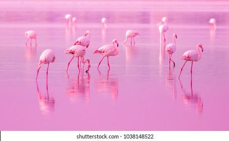 キプロスのピンクの夕日の湖を歩く鳥のピンクのフラミンゴス、テキスト用の美しいロマンチックなコンセプト、南への旅、愛とピンクの夢、ピンクの湖