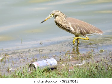 Birds in Polluted Water