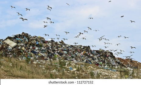 Birds and pollution Description: The seagulls on landfill