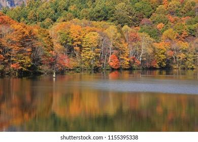 Birds Pond of autumn nagano prefecture japan