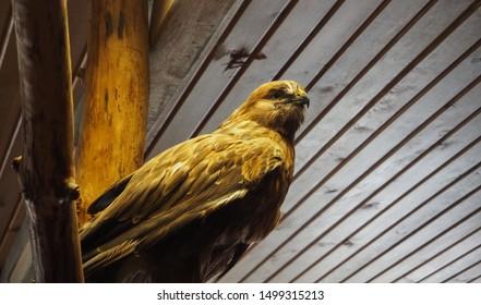 Birds of prey living in Turkey's Bolu province in the forest. Hawk, Eagle