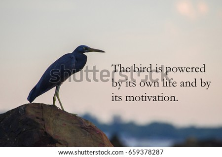 Birds Quotes The Bird Powered By Stock Photo Edit Now 659378287