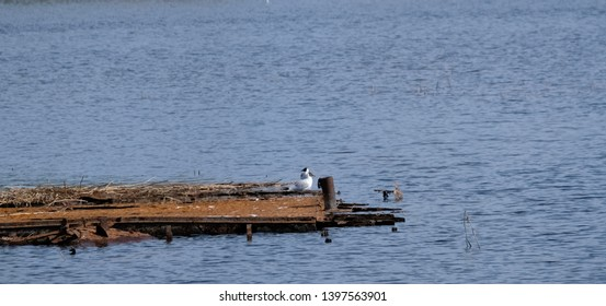 Birds relaxing on the Seliger lake beach