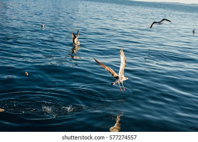 birds and sea