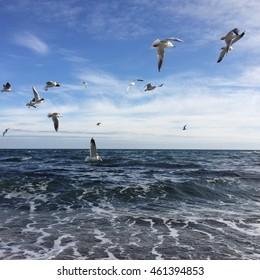 Birds and sea, amazing seascape