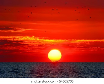 Birds and the sea on red sunset's background