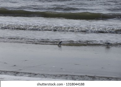 birds in the sea searching for food