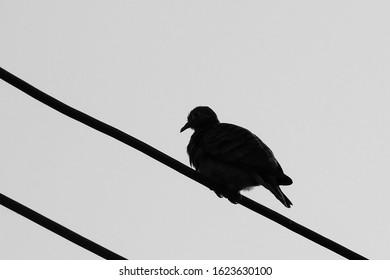 Birds Silhouette on power line.