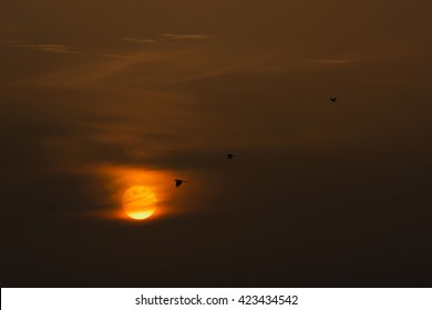 Birds silhouettes with an orange and yellow sunset beaming in the background. Perfect background for a text